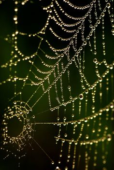"500px / Photo ""Pearls"" by Andy 58 in northern california wine country by the river there are 100'0's of these webs of pearls in the dawn's early light that will take your breath away.  www.liberatingdivineconsciousness.com"