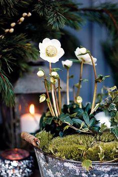 DESDE MY VENTANA: Winter Flowers Inspiration