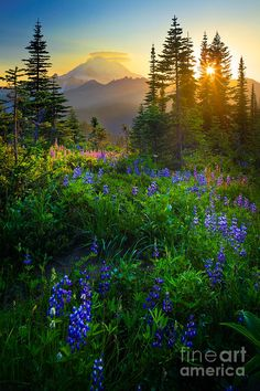 ✯ Mount Rainier Sunburst