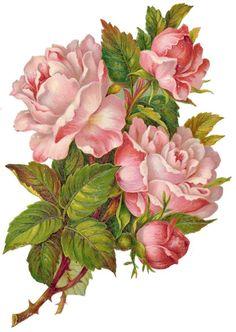 Scraps - Victorian Die Cut - Victorian Scrap - Tube Victorienne - Glansbilleder - Plaatjes: Rosen