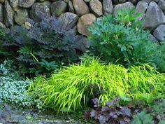 hydrangea hillside black beauty | combo: Actaea simplex 'Hillside Black Beauty' (aka Cimicifuga ...