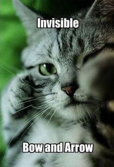 """Catniss"""