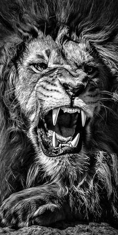 Lion Leg Tattoo, Lion Tattoo Sleeves, Lion Tattoo Design, Tiger Tattoo, Leg Tattoos, Sleeve Tattoos, Lion Design, Lion Tattoo On Back, Lion Wallpaper Iphone