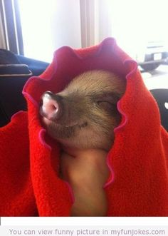 Happy pig fun cute animals! humor pictures  - http://www.myfunjokes.com/other-funny/happy-pig-fun-cute-animals-humor-pictures/ funny jokes and quotes and sayings , silly jokes
