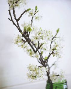We just have to remind ourselves that the source of any happiness is mind itself. Dawno nie miałam tak dziwnego dnia... mam nadzieję że Wasz był o wiele lepszy!  #floweraddict #flowers #whiteflowers #white #instamatki #instamatkikielce #igerskielce #kielce #hapiness #calm #slowlife  #slow