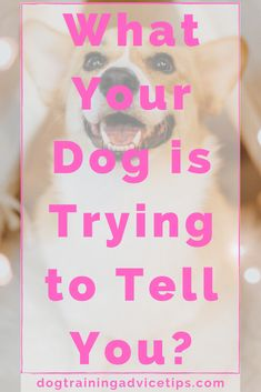 If your dog can speak, what do you think he would try to tell you? Here are some common stances and postures that your dog use to tell you something. Dog Information, Dog Facts, Little Dogs, Dog Care, To Tell, Dog Training, Your Dog, Cute Animals, Told You So