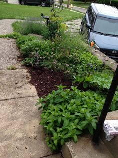 Herb garden after one year