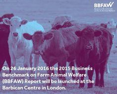 Mañana se publica el ranking de empresas alimentarias que más respetan el bienestar animal