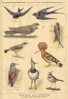Oiseaux - ceux qu'il faut protéger