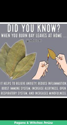 Do you burn bay leaves❓❓❓ Home Health Remedies, Natural Health Remedies, Good Health Tips, Health And Beauty Tips, Healing Herbs, Natural Healing, Health Facts, Health And Nutrition, Health And Wellbeing