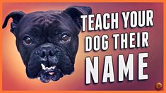 Teach Your Dog Their Name - Even Change a New Dog's Name! Puppy Training Tips, Dog Training Videos, Ian Stone, New Puppy, Your Dog, Names, Change, Puppies, Teaching