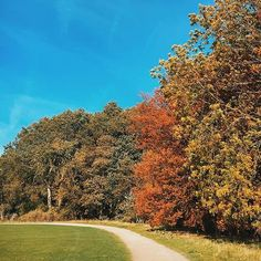 Lovely crisp autumn walk with on our lunch break today 🌳🍂 Autumn Walks, Crisp, Golf Courses, Walking, Country Roads, Lunch, Photo And Video, Instagram, Videos