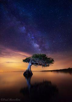 Celestial Cypress by Paul Marcellini, via 500px