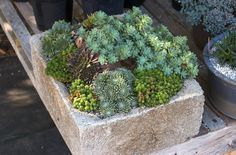 Garden wall troughs - If you like plants and flowers but do not have a garden or patio large enough to plant, do not worry, he has appeared a new method Garden Troughs, Garden Planters, Succulent Planters, Rock Garden Plants, Lawn And Garden, Garden Art, House Plants, Succulents In Containers, Cacti And Succulents