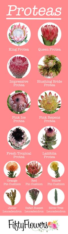 Protea can easily add texture and drama to any arrangement! Check out our Protea. Protea can easil Protea Bouquet, Protea Flower, Bouquets, Tropical Flowers, Tropical Floral Arrangements, Table Flower Arrangements, Types Of Flowers, Cut Flowers, Landscaping