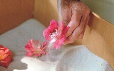 Aprende a Secar Flores En Pocos y Simples Pasos                                                                                                                                                                                 Más
