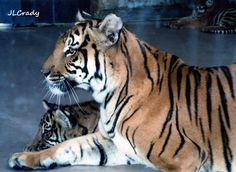 Mama love - Henry Doorly Zoo, Omaha, NE