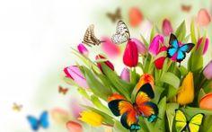 PRIMAVERA, Flores, Mariposas, TULIPANES