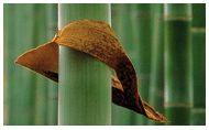 """TENBRO"" bamboo fiber and bamboo yarn manufacturer: Shanghai Tenbro Bamboo Textile co.,ltd."