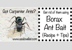 Make your own Borax Ant Bait