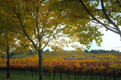 Napa Valley in fall.. always beautiful
