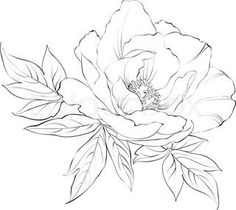 Peony Flower Line Drawing Sketch Coloring Page (inspiration - royal icing for sugar cookies)