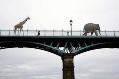 Giraffe und Elefant auf Wanderschaft. Sind die aus einer Zirkusvorstellung ausgebüxt? Recht so!