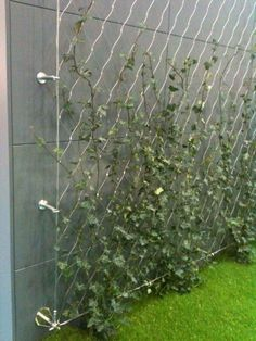 * DIY green wall using tensioned mesh and stainless steel fixings