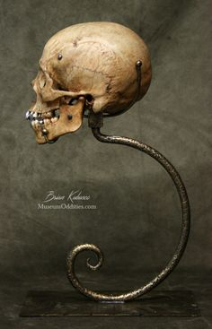 Oddity Real Skull Goth Bone Art Curiosities Animal Skull Carved Skull Skull Carving Oddities Real Bone Coyote Skull Momento Mori
