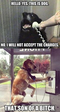 dogs talking on telephone, funny