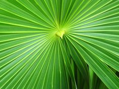 Palm- wish mine looked like this...