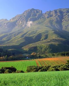 Stellenbosch South Africa Most beautiful vineyards I have ever seen. Beautiful World, Beautiful Places, Beautiful Scenery, Amazing Places, Wonderful Places, Places To Travel, Places To Visit, Travel Destinations, African Holidays