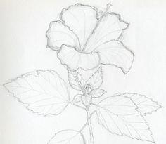 Flower Drawings Tips Hibiscus Flowers Drawing Tutorial - Hibiscus Flower Drawing, Hibiscus Flowers, Flower Art, Drawing Flowers, Flower Drawings, Pencil Drawings, Flower Girls, Paint Flowers, Tattoo Drawings