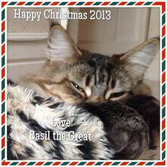 Happy Christmas 2013 from Basil the Great