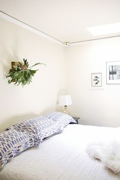 7 Rooms That Will Make You Want a Staghorn Fern