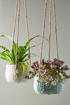 Gorgeous hanging planters - Hand-painted, crackled glaze lends color and luster to a beautifully textured terracotta pot perfect for hanging indoor and outdoor plants alike. Best Indoor Plants, Outdoor Plants, Outdoor Decor, Jade Plants, Potted Plants, Plant Pots, Pots For Plants, Bamboo Plants, Tomato Plants
