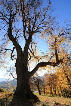 'Tree of life' by zIwa Simple Tree, Tree Photography, Photo Tree, Sketch Design, Autumn Trees, Tree Of Life, Tree Tree, Wall Decor, Plants