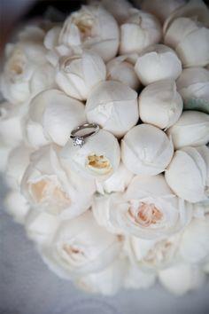 david austin roses- Ahhhh obsessed!!!!!