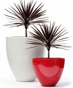 Fibreglass planters - Obbligato www.obbligato.co.za
