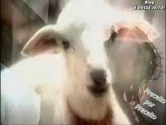 """BLOG É DESSE JEITO !: O Livro do Apocalipse - """"O CORDEIRO e os Seus Remi..."""