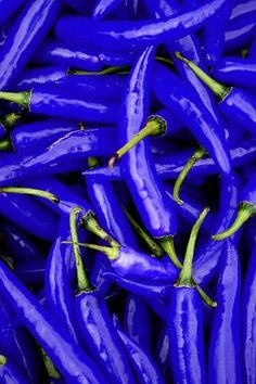 Blue Hot Peppers - wouldn't these be pretty in a garden! Bleu Turquoise, Cobalt Blue, Blue Green, Purple, Cerulean, Dark Blue, Azul Indigo, Bleu Indigo, Azul Anil