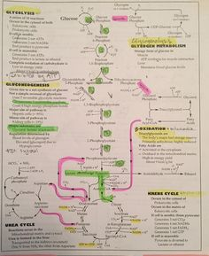 Overview of metabolism all in a flowchart : Mcat - Biochemie Study Biology, Biology Lessons, Teaching Biology, Science Biology, Life Science, Biology Memes, Biology Projects, Forensic Science, Computer Science
