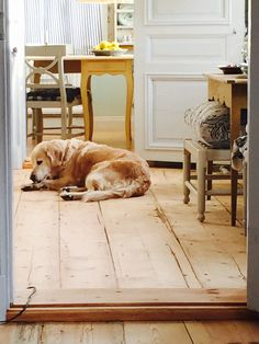 Our dog Saga.
