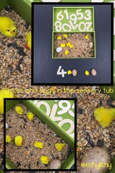 Chicks and eggs in the mini sensory tray (contains bird seed) Added numerals too.