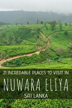 Although small, there are tons of fun things to do in Nuwara Eliya, Sri Lanka. From the highest mountain in Sri Lanka to the stunning tea fields, here's our guide! Cool Places To Visit, Places To Travel, Travel Destinations, Venice Travel, India Travel, Romantic Vacations, Romantic Travel, Arugam Bay, Backpacking Asia