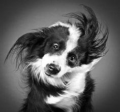 Les chiens en plein mouvement et en images