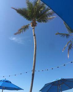 Paradise found !!!!! . . . . . . . . . . #lovesparkleshine #paradise #found #flkeys #Florida #keys #tradition #blue #skies #palmtree #weekend #obsessed #fashionblogger #umbrella #blue #skies #love
