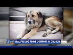 Dog's Owner Passed Away, And What Happened Next Is Simply Unbelievable