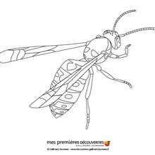 La Abeja Dibujos Para Colorear Y Pintar Dibujos Para Colorear Animales Dibujos Insectos Para Colorear Ins Dibujos Para Colorear Dibujo De Abeja Dibujos