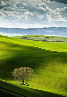 This picture is incredibly relaxing. Perfect place for a picnic. Tuscany in Italy. #travel
